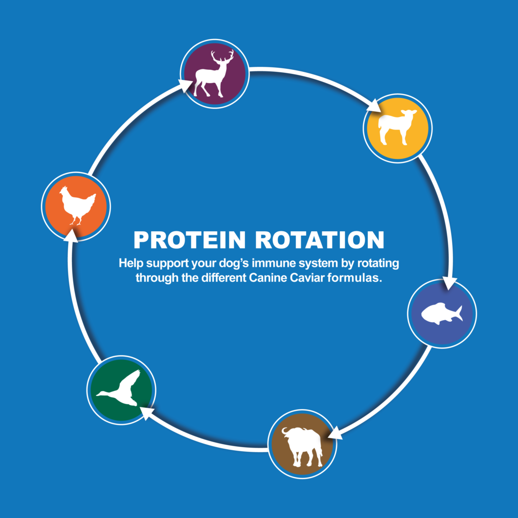 Protein rotation